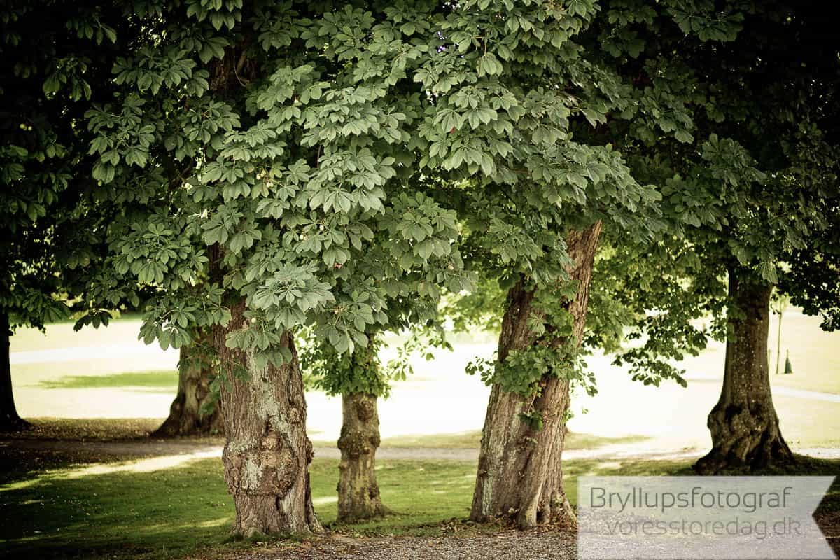 Bryllup Scandic Bygholm Park Horsens17