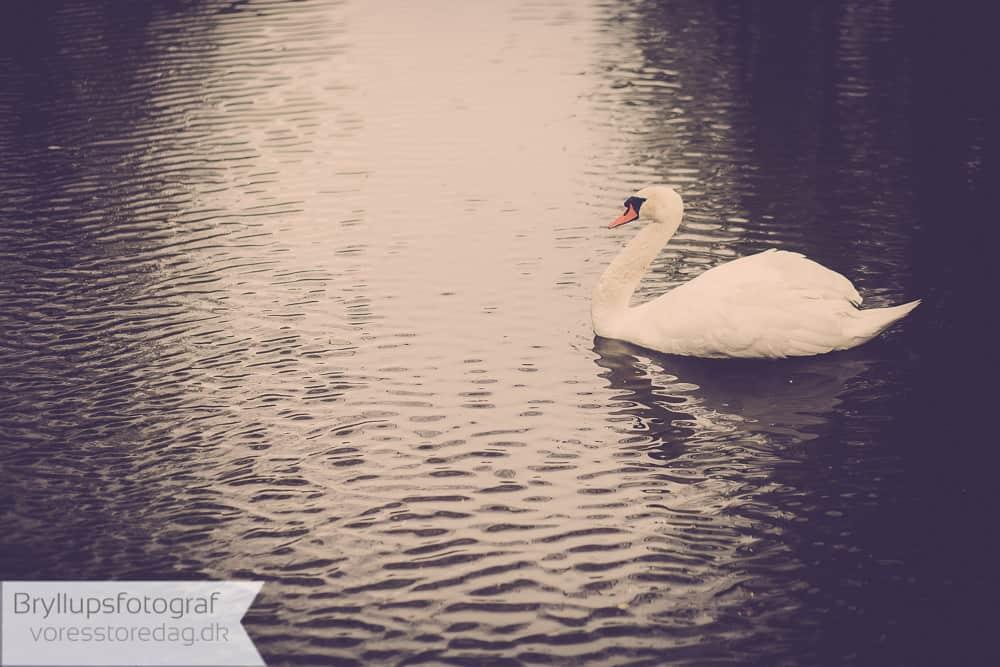 bryllupsfoto-315