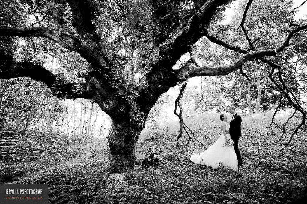 Bryllup i dyrehaven